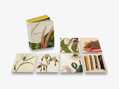 Remarkable Plants - 20 Notecards